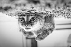 500px ISO » Unbelievable Photography » Best Photos of 2013: Cats