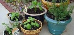How to Grow Organic Vegetables in Pots   eHow