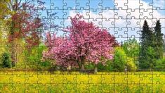 Cherry tree - online jigsaw puzzle - 72 pieces Trees Online, Free Online Jigsaw Puzzles, Puzzle Games, Cherry Tree, Tulips, Wallpaper, Green, Flowers, Cherry Plant
