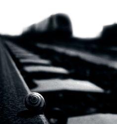 Fratelli di TAV. A documentary about the italian high speed train.