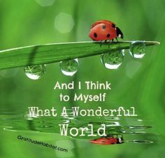 And I think to myself.What a Wonderful World. Singing Lessons, Singing Tips, Life Lessons, What A Wonderful World, Words Quotes, Wise Words, Life Quotes, Crush Quotes, Quotes Quotes