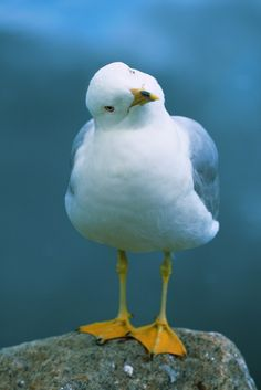 "Can't look at a seagull without hearing ""mine, mine, mine"" thanks to the cast from Finding Nemo"