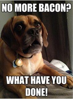 Funny Dog Memes, Funny Animal Memes, Funny Dogs, Funny Animals, Animal Humor, Dog Funnies, Adorable Animals, Hilarious Jokes, Pet Memes