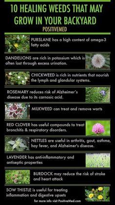 10 healing weeds