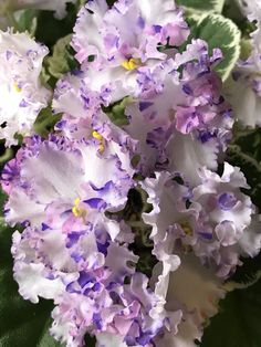 Trendy how to grow orchids houseplant african violet Ideas