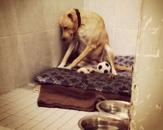 The picture of Lana that went viral as the 'Saddest dog in the world'.