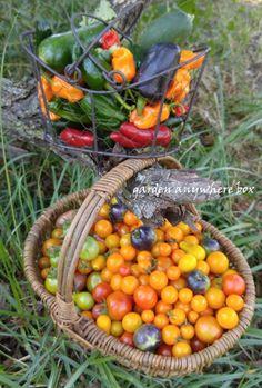Garden Harvest...October 2, 2015   www,gardenanywherebox.com