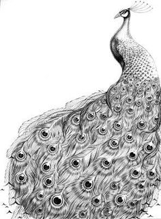 Drawing lessons for beginners - A PEACOCK / How to Draw. Painting and Drawing for Kids Peacock Sketch, Peacock Drawing, Peacock Tattoo, Peacock Art, White Peacock, Peacock Pics, Black And White Sketches, Black White Art, Pfau Tattoo