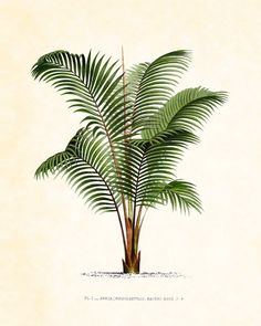 Antique French Palm Tree Plate 1 1878 8 x 10 by BelleMerGraphics