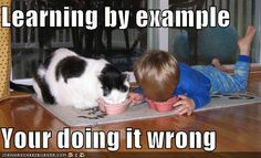 Funny Animal Pictures - View our collection of cute and funny pet videos and pics. New funny animal pictures and videos submitted daily. Like Animals, Animals For Kids, Baby Animals, Funny Babies, Funny Kids, Cute Baby Pictures, Funny Pictures, Image Chat, Cat Patch