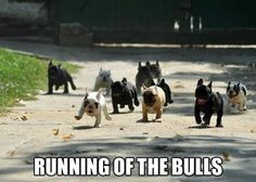 Funny dogs - Running of the bulls - http://jokideo.com/funny-dogs-running-of-the-bulls/
