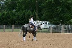 Are you in the market for a ranch horse versatility horse? Check out this grey gelding on Equine.com