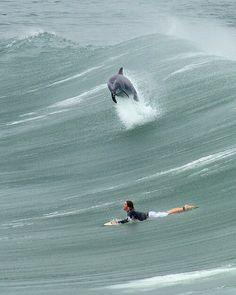Dolphin!!!!!