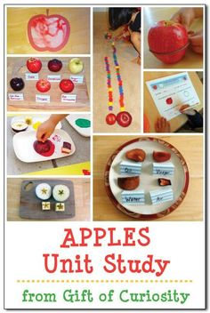 Lots of ideas for an apple unit study for preschoolers or kindergarteners. Includes books about apples as well as apple-themed crafts, math activities, science activities, and more! by nellie Preschool Apple Theme, Apple Activities, Fall Preschool, Autumn Activities, Kindergarten Activities, Science Activities, Kindergarten Apples, Kindergarten Classroom, Preschool Ideas