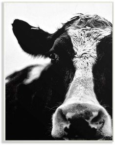 Black And White Picture Wall, Black And White Pictures, Cow Pictures, Wall Pictures, Cow Wall Art, H Design, Black And White Aesthetic, Red Aesthetic, White Cow