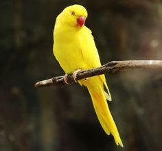 Yellow Animals, Colorful Animals, Colorful Birds, Cute Animals, Funny Animals, Monk Parakeet, Parakeet Bird, Budgies, Parrots