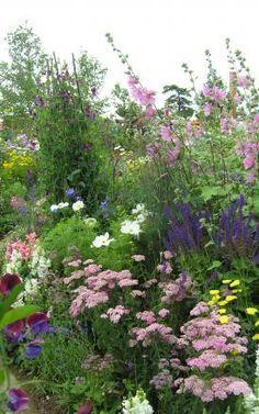 Bauerngarten Sommerblumen und Staudenbeet