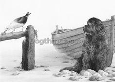 Newfoundland Limited Edition fine art dog print Mike Sibley