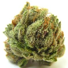 purple hindu cannabis marijuana