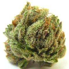 Hindu Cannabis Purple Marijuana We can totally crush this one!