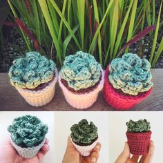 Mini Crochet Succulents now available! (Link in profile) Perfect office companions.  by hooksandmint