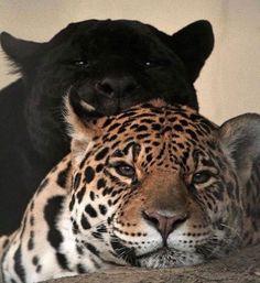 Cute Creatures, Beautiful Creatures, Animals Beautiful, Animals And Pets, Baby Animals, Cute Animals, Animal Babies, Wild Animals, Belle Photo