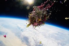50-year-old bonsai and flowers sent to space in the name of art
