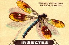 insecte 1 | Flickr - Photo Sharing!
