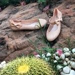 #shoefactory #shoes #melissa #fashion