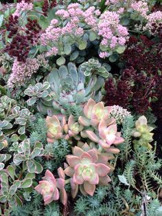 Succulents in a planter at Plantsville Pines Gardens
