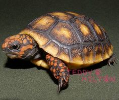 A lost pet tortoise was found alive after being stuck in a storage closet for 30 years.
