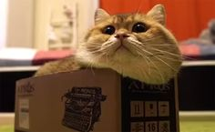 Daily Cute: Cat Determined to Fit Inside Box