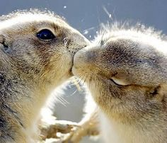 The squirrels! They are kissing!