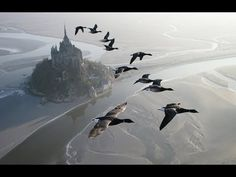 Amazing fligts with birds on board a microlight. Christian Moullec avec ses oiseaux - YouTube