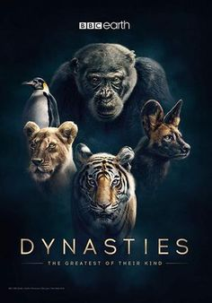 Watching one of the best documentary in recent times.cinematography at it's best peppered with amazing narration by Sir David Attenborough.The holiday season is on. Wild Life Videos, Bbc, David Attenborough, Best Documentaries, Chimpanzee, Love Island, Mother Earth, Season 1, Cinematography