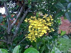 Pequenas flores amarelas. Não sei o nome delas.