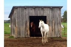 How to Build a Miniature Horse Barn | eHow