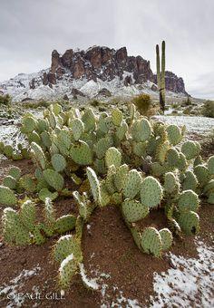 Lost Dutchman Park, Apache Junction, AZ. → For more, please visit me at: www.facebook.com/jolly.ollie.77 Arizona Travel, Sedona Arizona, Phoenix Arizona, Superstition Mountains, Desert Life, Land Of Enchantment, Beautiful Places, Wonderful Places, Cacti And Succulents