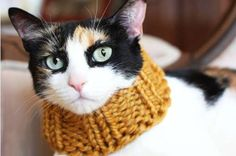 45 Playful Pet Ensembles - From Doggy Coats to Giant Giraffe Sweaters (TOPLIST)