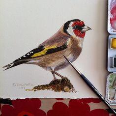 A Goldfinch - Bird Art by #blueshineart #goldfinch #watercolour #birdInstagram photo by @blueshineart (Charlotte Hamilton)
