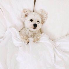 tumblr, puppy, animals, dog, cute // pinterest and insta → siobhan_dolan