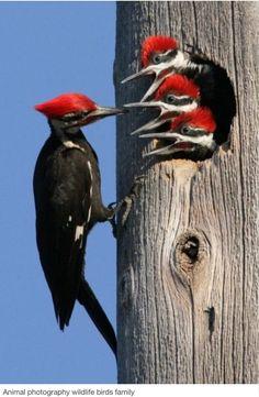 ¡Toc, toc, toc...los pájaros carpinteros ¡que destructores son! Se han acabado mis ventanas de madera! Pero amorosos si que son.