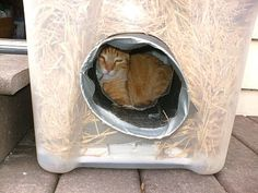 : Cómo hacer un refugio de invierno para un gato al aire libre -------------- The Very Best Cats: How to Make a Winter Shelter for an Outdoor Cat Feral Cat Shelter, Feral Cat House, Outdoor Cat Shelter, Outdoor Cats, Feral Cats, Cat Shelters, Outside Cat House, Neko, Cat Info