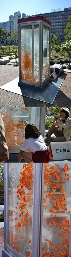 A talented group of Japanese students transformed abandoned phone booths around Osaka into goldfish aquariums.
