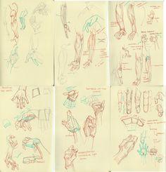 anatomy dump 4 by ~kakimari on deviantART
