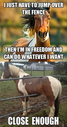 Well, that didn't work out as expected... #horses #humor #funny