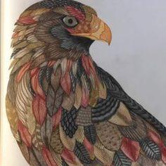31 Best Beautiful Birds Tree Top Treasures Images On Pinterest In