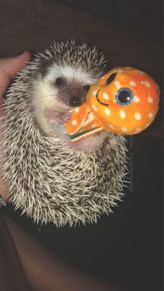 Does there exist a cuter thing than this hedgehog cuddling a squid? I think not.