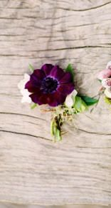 The rest of the boutonnieres and corsages will be purple anemones and seeded euchalytpus wrapped in raffia with the stems showing.