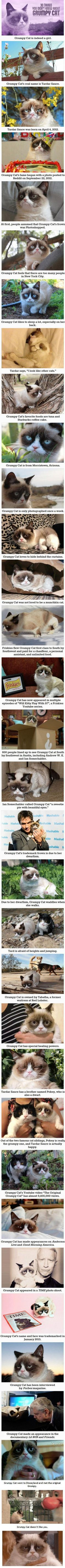Things That You Probably Didn't Know About Grumpy Cat... Hey, Grumpy Cat is from Arizona!  Go Grumpy Cat. ..
